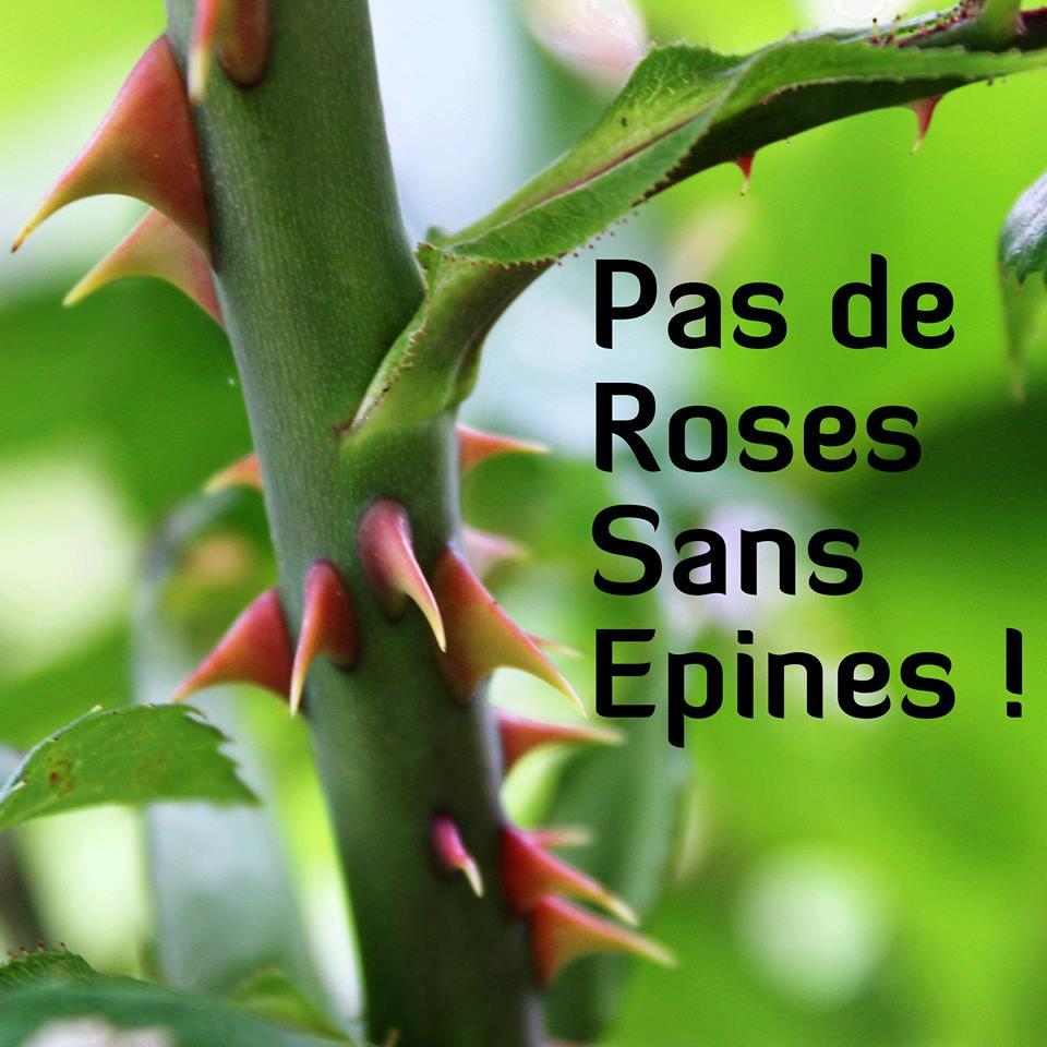 Pas de roses sans épines